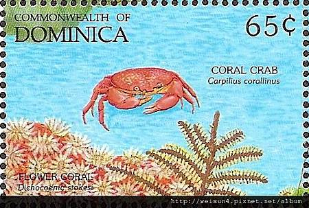 09-07_C1436_瓢蟹科_珊瑚瓢蟹