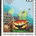 09-11_C1029_瓢蟹科_珊瑚瓢蟹