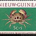 09-13_C1064_瓢蟹科_紅斑瓢蟹