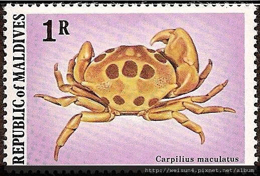 09-18_C1069-01_瓢蟹科_紅斑瓢蟹