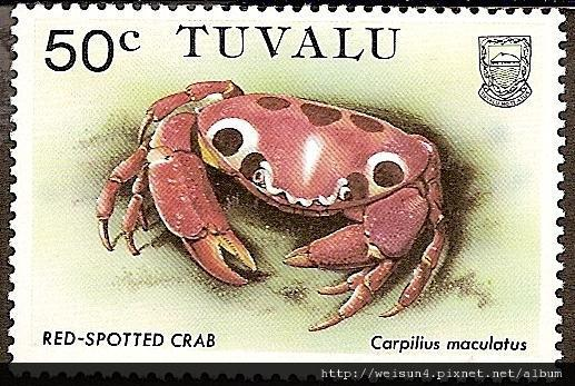 09-21_C0142-01_瓢蟹科_紅斑瓢蟹