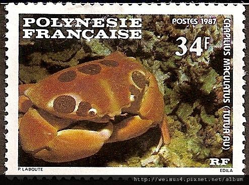 09-22_C1058_瓢蟹科_紅斑瓢蟹
