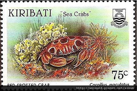 09-26_C0281-01_瓢蟹科_紅斑瓢蟹
