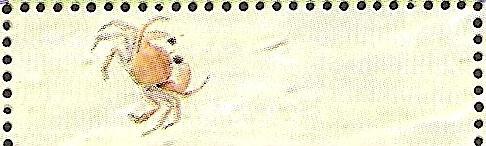 15-01_zC1184_長腳蟹科_微型隆背蟹