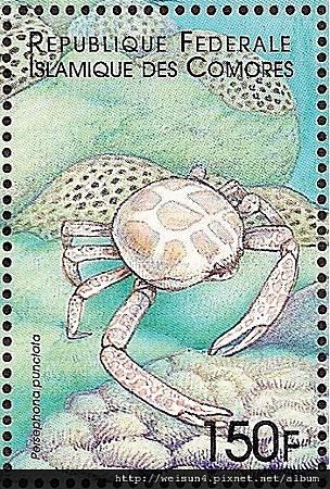 16-02_C1060_玉蟹科_斑前輝蟹