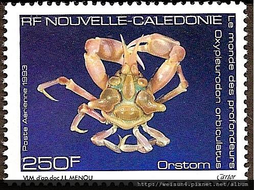 17-03_C0197_臥蛛蟹科_球形尖胸齒蟹