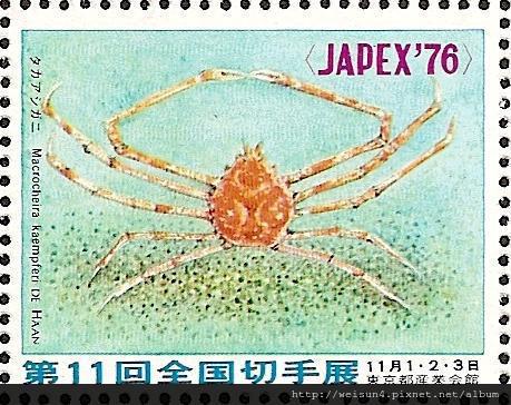 18-05_C1441_尖頭蟹科_甘氏巨螯蟹