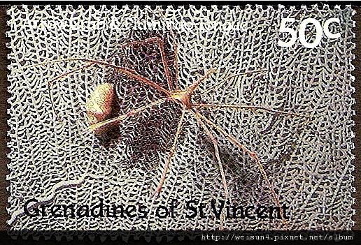18-12_C1059_尖頭蟹科_長錐狹端蟹
