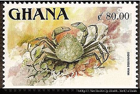 19-07_C0182-02_蜘蛛蟹科_合團蜘蛛蟹