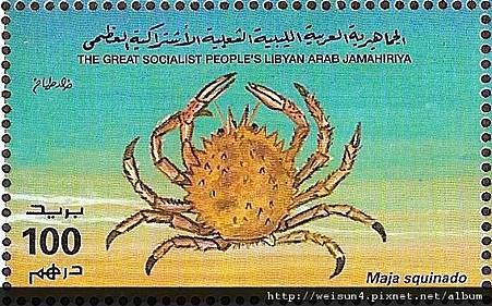 19-09_C0565-06_蜘蛛蟹科_合團蜘蛛蟹