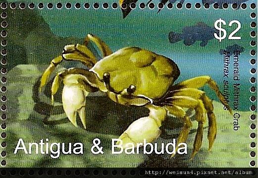 19-13_C1225_蜘蛛蟹科_雕紋擬寶石蟹