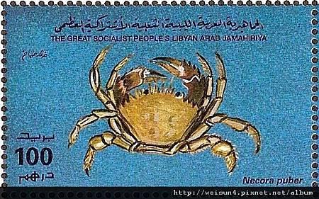 25-37_C0565-09_梭子蟹科_普柏磨面蟹