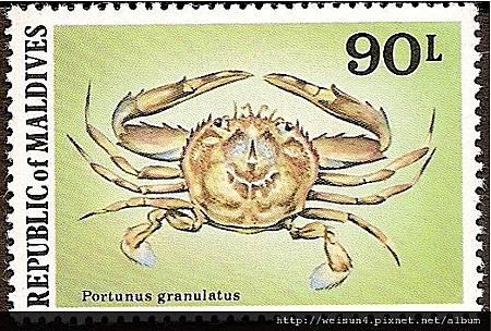 25-43_C1069-03_梭子蟹科_顆粒梭子蟹