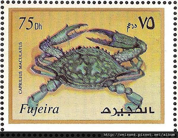 25-45_C0566-01_梭子蟹科_遠海梭子蟹