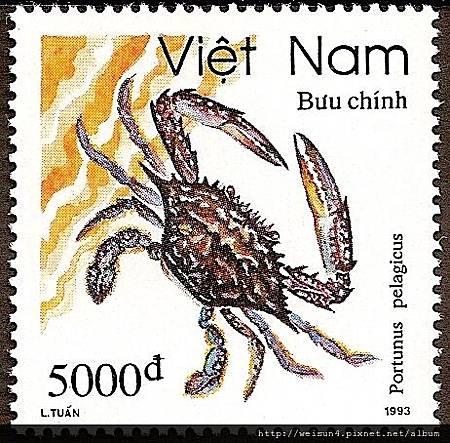 25-49_C0414-02_梭子蟹科_遠海梭子蟹