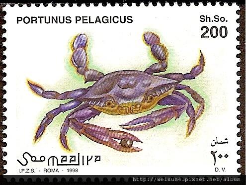 25-50_C1054_梭子蟹科_遠海梭子蟹