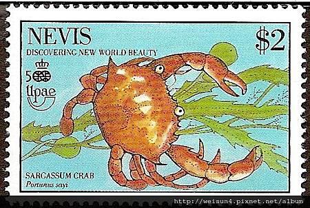 25-53_C0138-05_梭子蟹科_賽氏梭子蟹