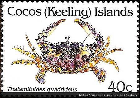 25-66_C0227-01_梭子蟹科_四齒擬短槳蟹
