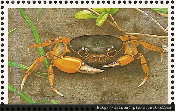 26-04_C0124-04_溪蟹科_珠公主泰溪蟹