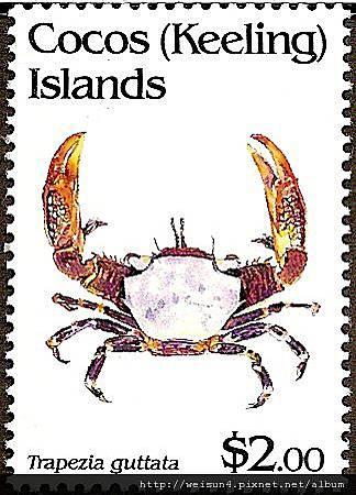 30-05_C0227-04_梯形蟹科_斑點梯形蟹