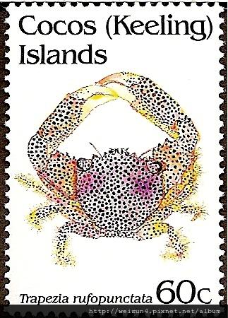 30-06_C0227-05_梯形蟹科_紅斑梯形蟹