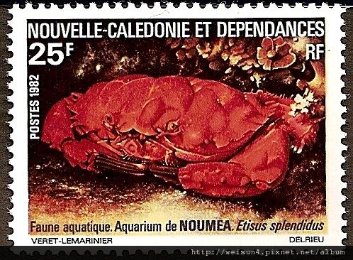 31-05_C0283_b_扇蟹科_燦爛滑面蟹