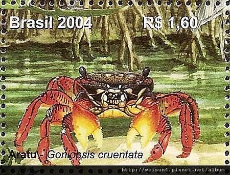 33-08_C0331-01_方蟹科_赭斑隅角蟹