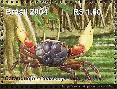 36-05_C0331-02_弓蟹科_顆粒新厚蟹