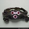 C0043_磁鐵_紅星梭子蟹