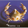 C0485_明信片_澎湖螃蟹博物館_玉蟹