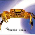 C0485_明信片_澎湖螃蟹博物館_兇狠圓軸蟹