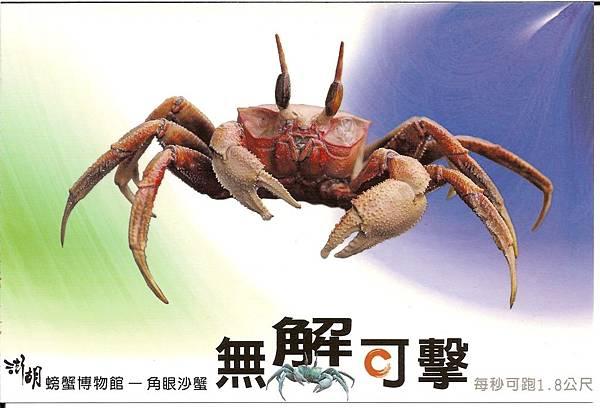 C0485_明信片_澎湖螃蟹博物館_角眼沙蟹