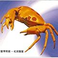 C0485_明信片_澎湖螃蟹博物館_紅斑瓢蟹