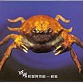 C0485_明信片_澎湖螃蟹博物館_綿蟹