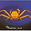 C0485_明信片_澎湖螃蟹博物館_關公蟹
