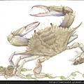 C0828_螃蟹賀卡