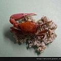C0212_標本_招潮蟹