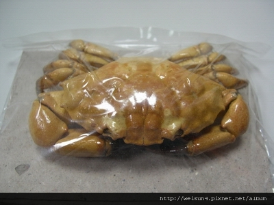 C0359_標本_扇蟹