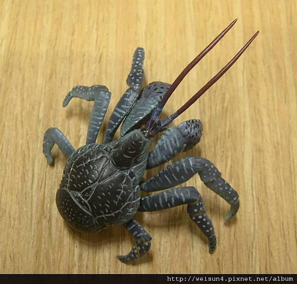 400_C0600_椰子蟹