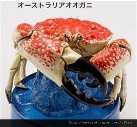 120_C1884_巨大擬濱蟹