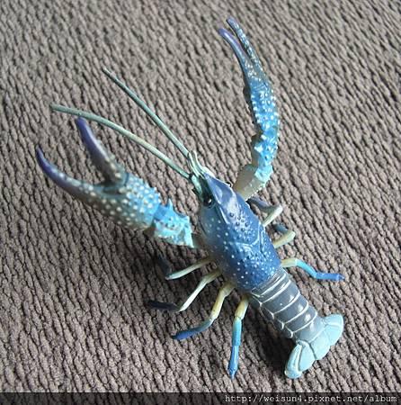 500_C0666_美國藍色螯蝦