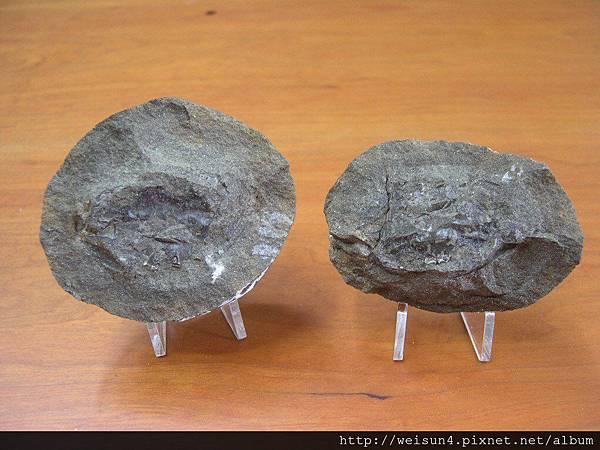 C0665_螃蟹結核化石_美國