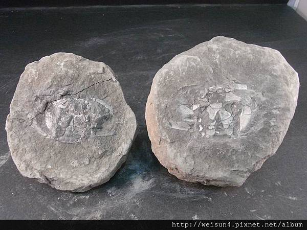 C1870_螃蟹化石_大溪