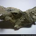 C1941_化石_螃蟹_2