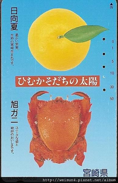 030_C1536_蛙蟹科_蛙形蟹