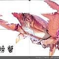 030_C1759_蛙蟹科_蛙形蟹