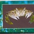 060_C1690_黎明蟹科_勝利黎明蟹