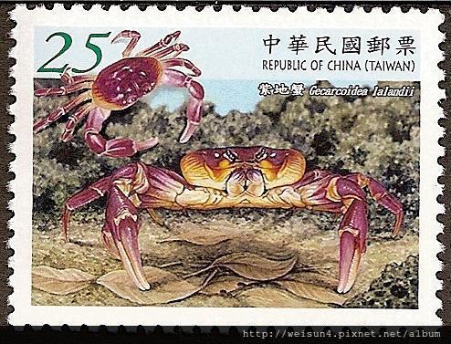 C1546_拉氏地蟹(紫地蟹)