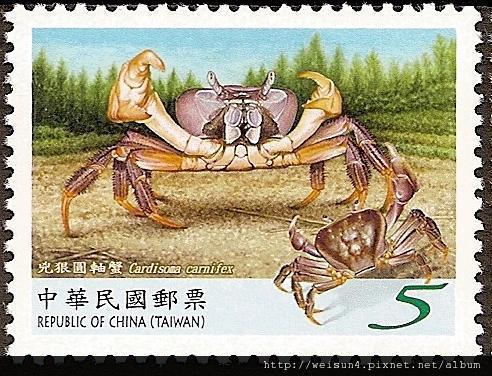 C1546_兇狠圓軸蟹