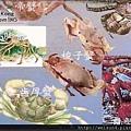 250_C1763_梭子蟹科_紅星梭子蟹